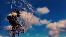 File:The dandelion.ogv