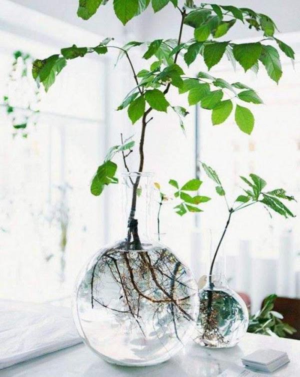 jardines-acuaticos-de-interior-04
