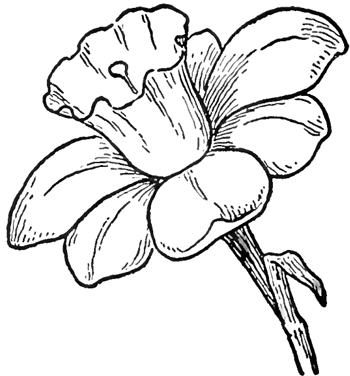 Tattoos Image Pictures Of Flowers To Draw