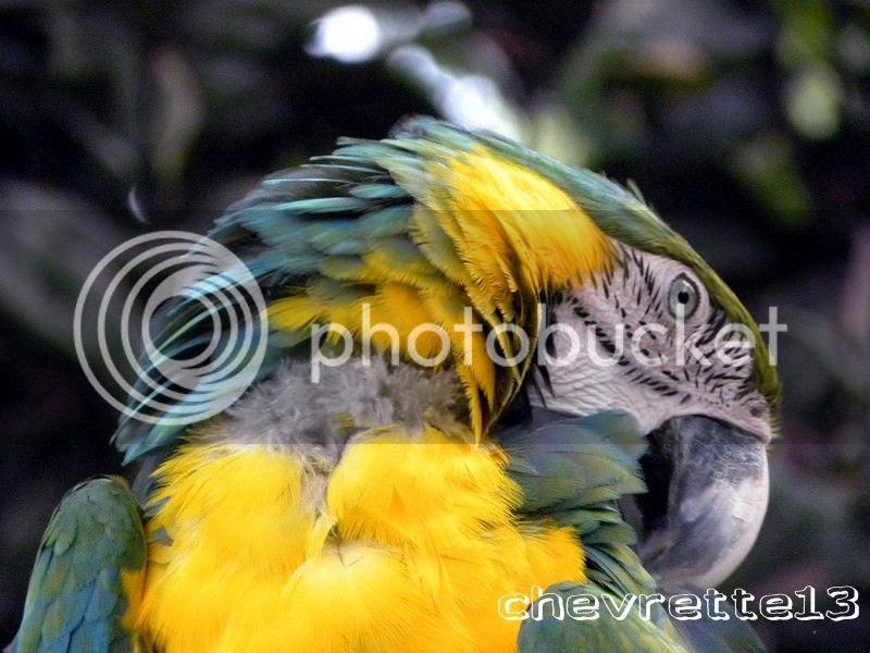 http://i1252.photobucket.com/albums/hh578/chevrette13/Guadeloupe/DSCN7060Copier_zps9ce439a8.jpg