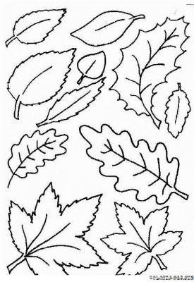 Coloriages Feuilles Des Fôrets Page 1 Automne