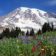 Washington State Travel Guide | Travel Advisor Tips