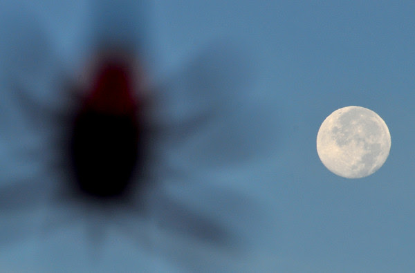 Full Moon Spider Light