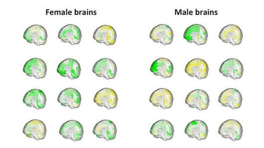 There's no such thing as a 'male brain' or 'female brain,' and scientists have the scans to prove it | Invent To Learn: Making, Tinkering, and Engineering in the Classroom