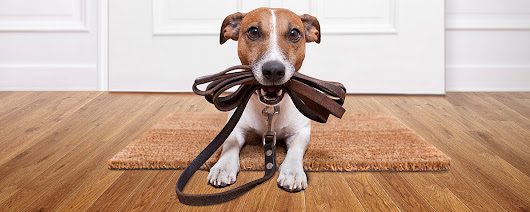 Dog Walkers Dallas & Pet Sitters Dallas