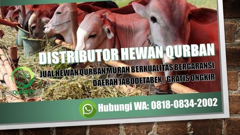 Contoh Banner Jual Kambing Qurban - gambar spanduk