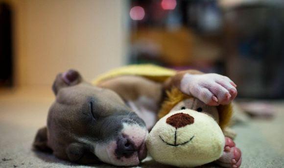 Fotos de cachorros 7