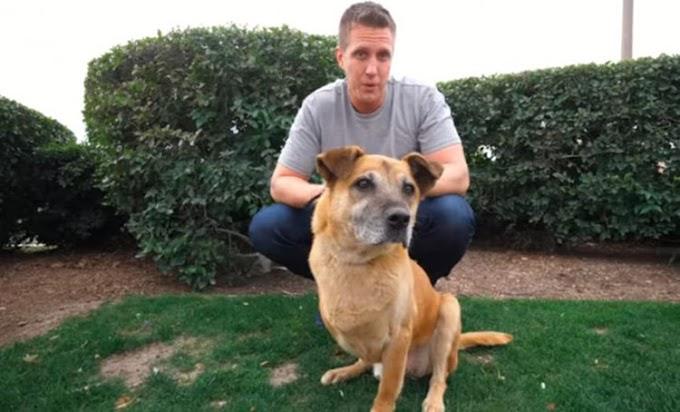 Le promete a un perro de 3 patas comprarle todo lo que toca en una tienda y le consigue un hogar