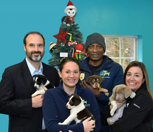 Free Dog Adoptions for Christmas! West Law Firm is Sponsoring the adoptions of 27 Dogs at the Kanawha Charleston Humane Association