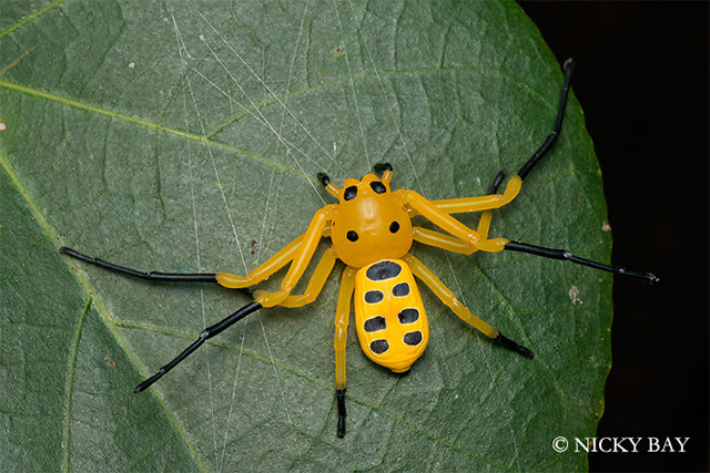 The Most Beautifully Terrifying Spiders You Never Knew Existed spiders Singapore nature macro