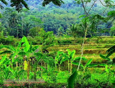 wallpaper pemandangan alam kampung wallpaper