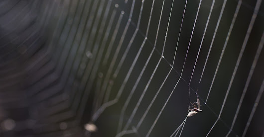 The Spider That Crawls the Dark Web, Looking for Stolen Data