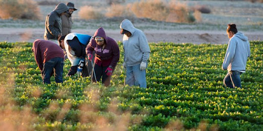 Immigrant Crackdown Worries Food and Construction Industries