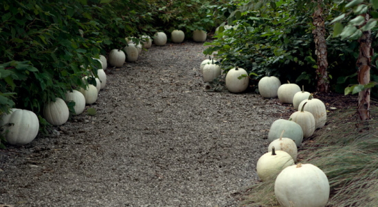 white-pumpkin-lined-path