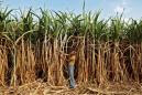 Exclusive: Malaysia to buy more Indian sugar to resolve palm oil spat - sources