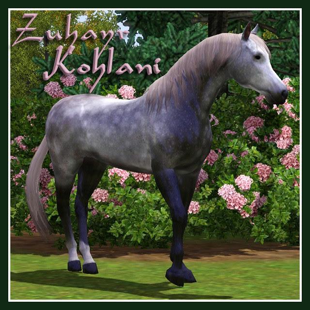 ZuhayrKolhani_Covershot
