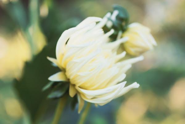 お疲れ様を伝える花言葉を持つ5つの花 Moon Light