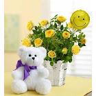 1-800 Flowers Sending You Sweet Smiles Plants