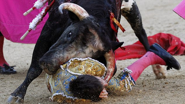 Impact:  The bullfighter was thrown to the ground before being gored by repeatedly by the bull