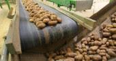 16. Patate: i 37 grammi di carboidrati contenuti in una patata di medie dimensioni possono alleviare una cefalea alzando i livelli di serotonina, se tenete il livello di grassi e proteine sotto i 2 grammi  (Foto:  FRANCOIS NASCIMBENI/AFP/Getty Images)