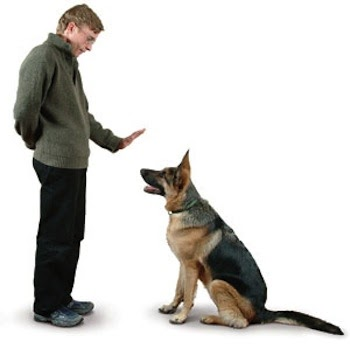 10 trucos para educar a un perro