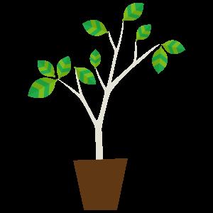 観葉植物の無料イラスト8 花植物イラスト Flode Illustration フロ