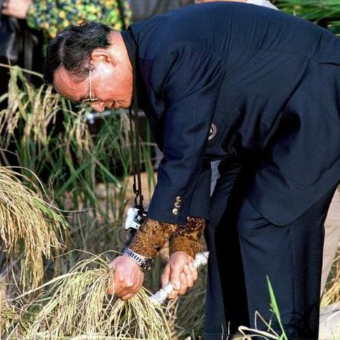 Bhumibol cutting rice