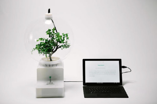 Microsoft's Project Florence lets you talk to your plants... and them talk back - MSPoweruser