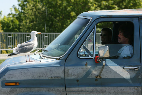 gull and dudes