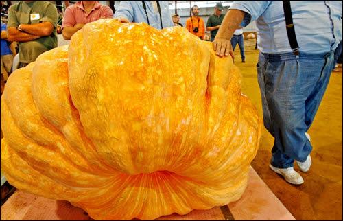 http://davidprudente.files.wordpress.com/2007/10/worlds-biggest-pumpkin.jpg