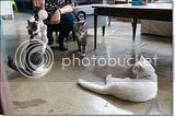photo Catcafe-11_zps068cb787.jpg