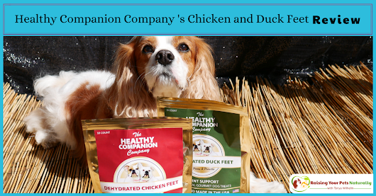 Best Dog Bones for Dogs | Healthy Companion Company Dog Chicken Feet and Duck Feet for Dogs Review ~ Raising Your Pets Naturally with Tonya Wilhelm