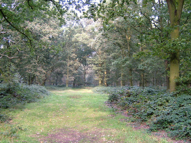 File:Epping Forest 3.JPG
