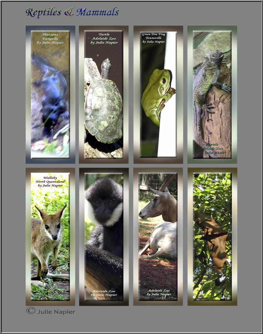 Reptiles & Mammals