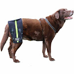 Walkin' Hip-EEZ - Hip Support System designed for dogs with hip dysplasia and other conditions effecting the hip joint Medium