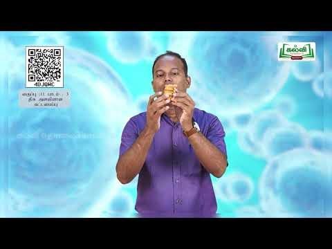 11th Zoology திசு அளவிளான கட்டமைப்பு பாடம் 3 Kalvi TV