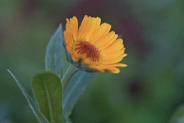 Flowers, Mahabaleshwar