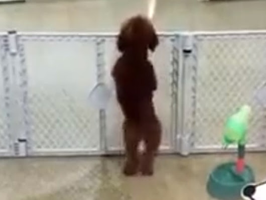 Must-watch video: Camera captures dancing dog at day care