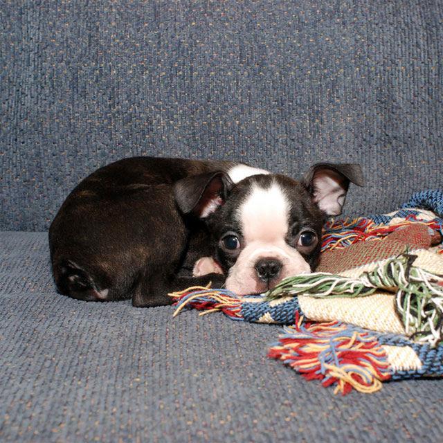 2006 12 Baxter