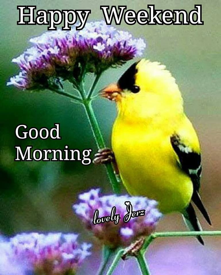 Yellow Bird Happy Weekend Good Morning Pictures Photos And Images