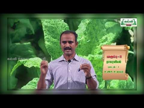 11th Botany உயிரி உலகம் பாடம் 1 பகுதி 2 Kalvi TV