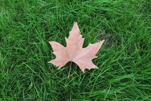 Complete List of St. Louis Leaf Clean-up Schedules for 2017