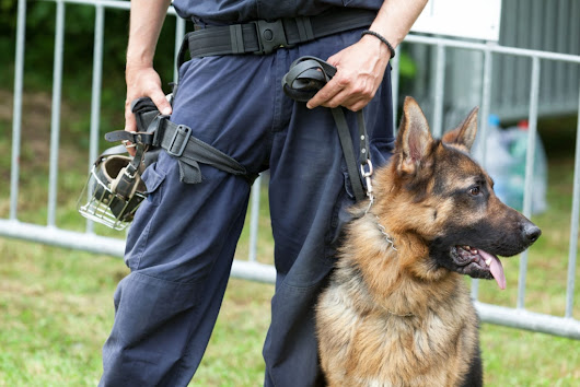 Drug Sniffing Dogs And Your Rights In Minnesota | Appelman Law Firm