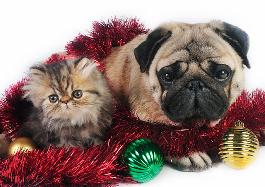 Holiday Health Hazards for Pets -