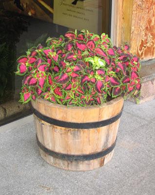 цветы в деревянных бочках