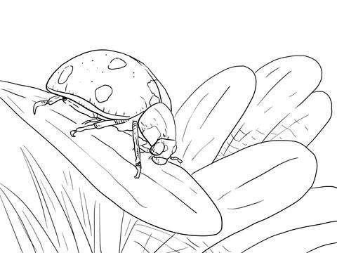 Dibujo De Mariquita Sobre Una Planta Para Colorear Dibujos Para