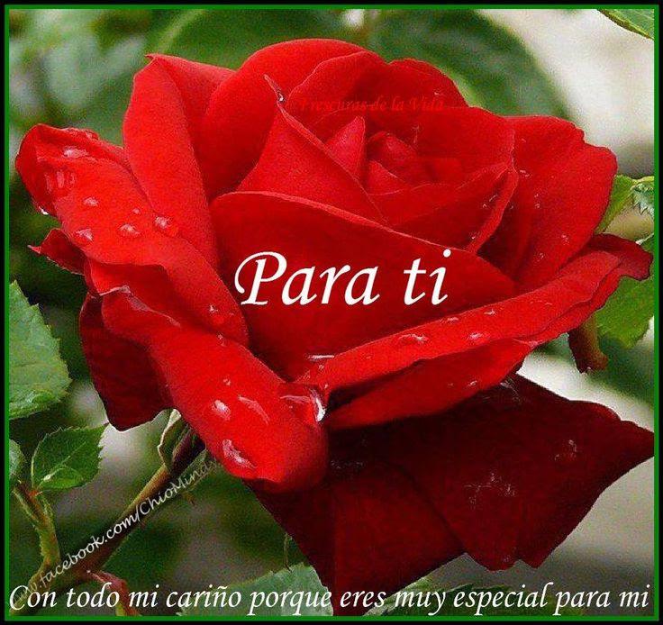 Feliz Jueves Esta Rosa Para Ti Aquinosreunimospersonaspositivas