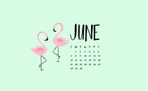 june flamingo digital wallpapers