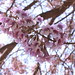 2010-04-23-11-27-54