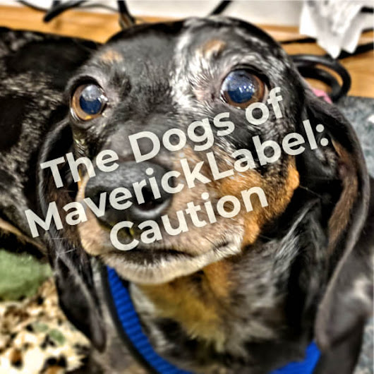 Dogs of MaverickLabel, Part 4 - Caution - MaverickLabel Blog
